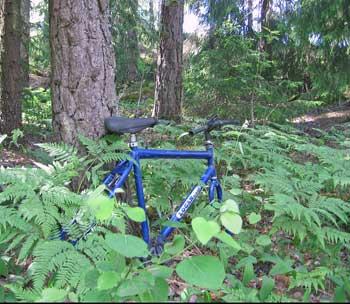 Cykel i skogen