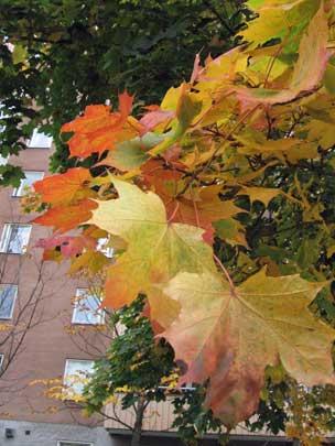 Löven brinner