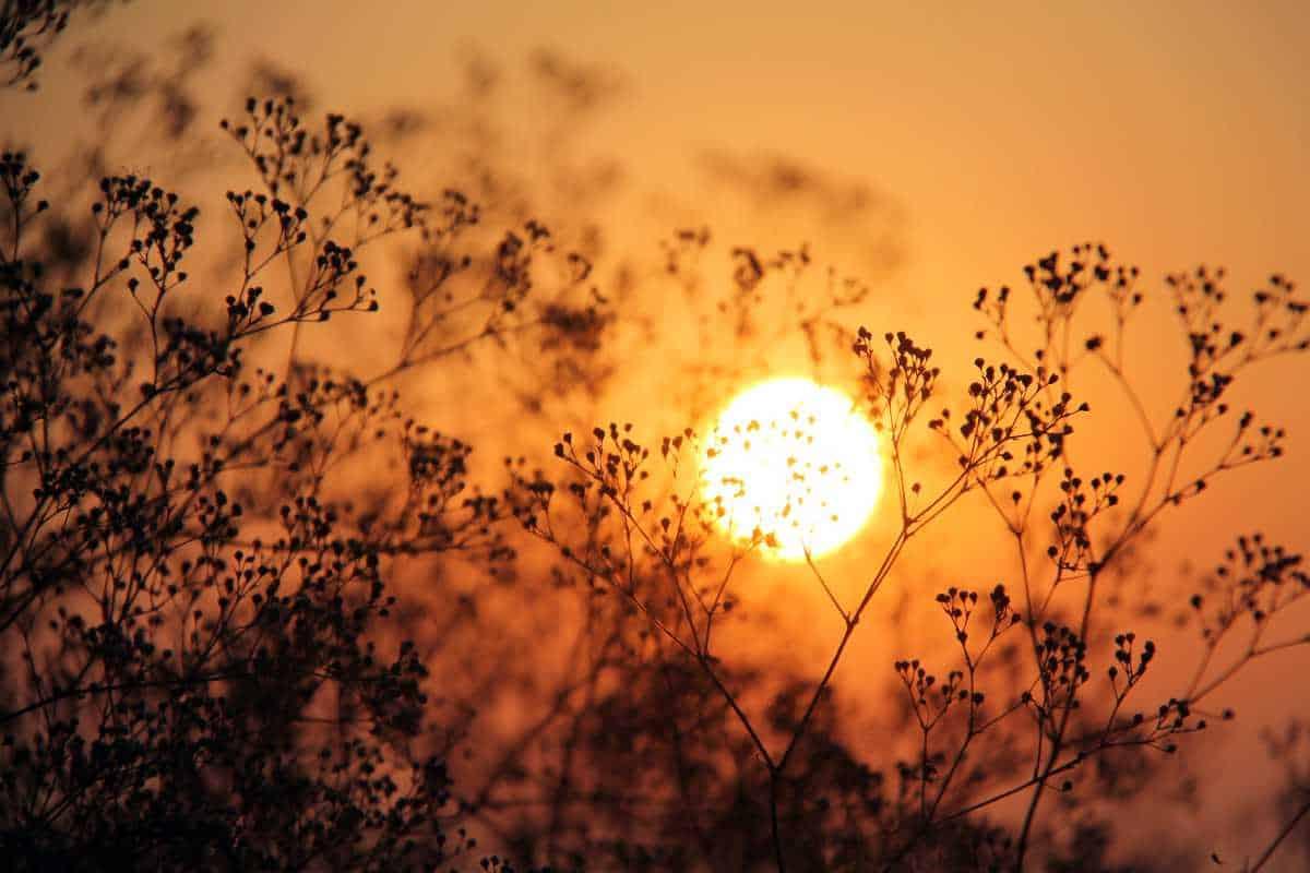 Skriv en haiku om solen