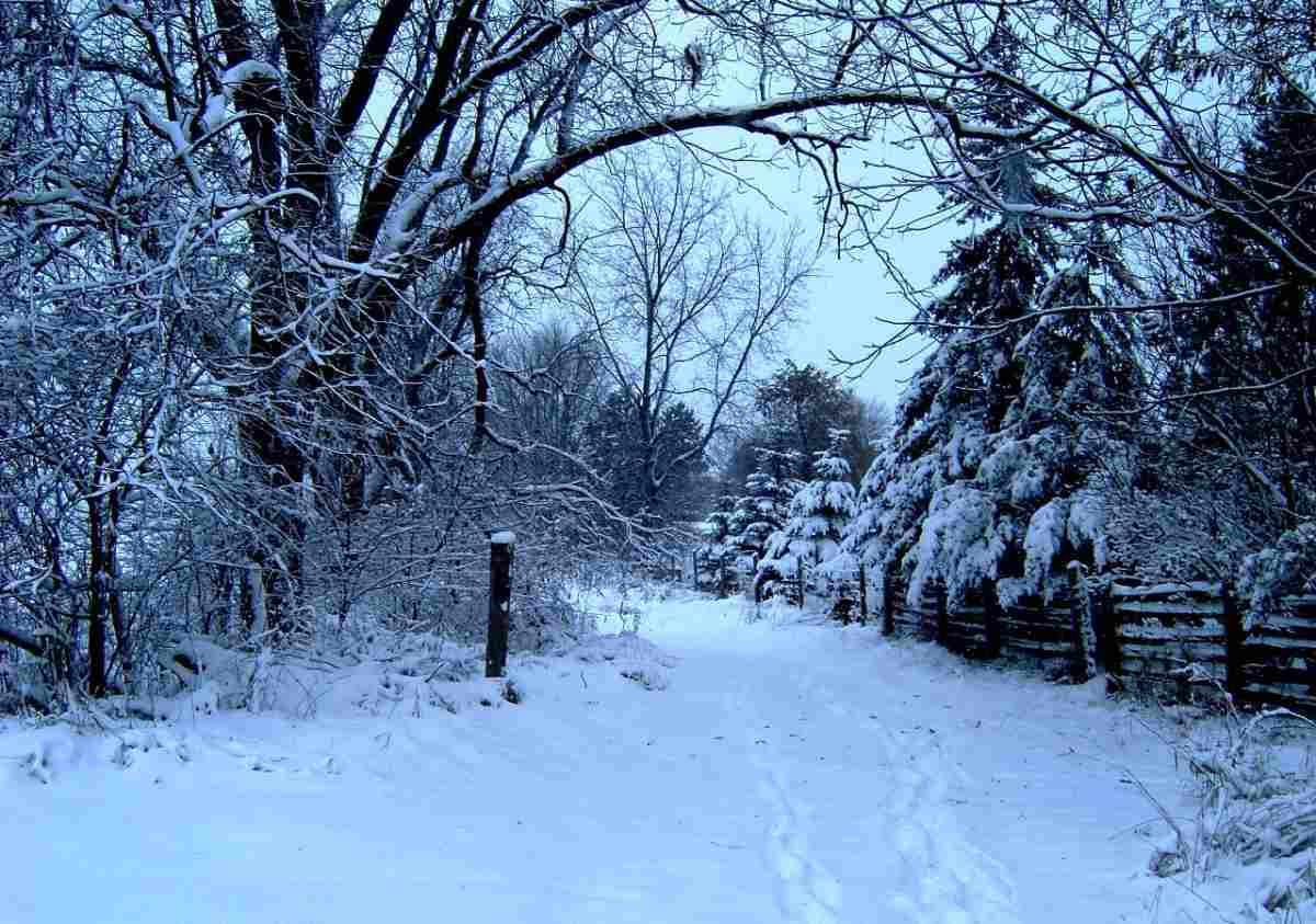 Januariblå