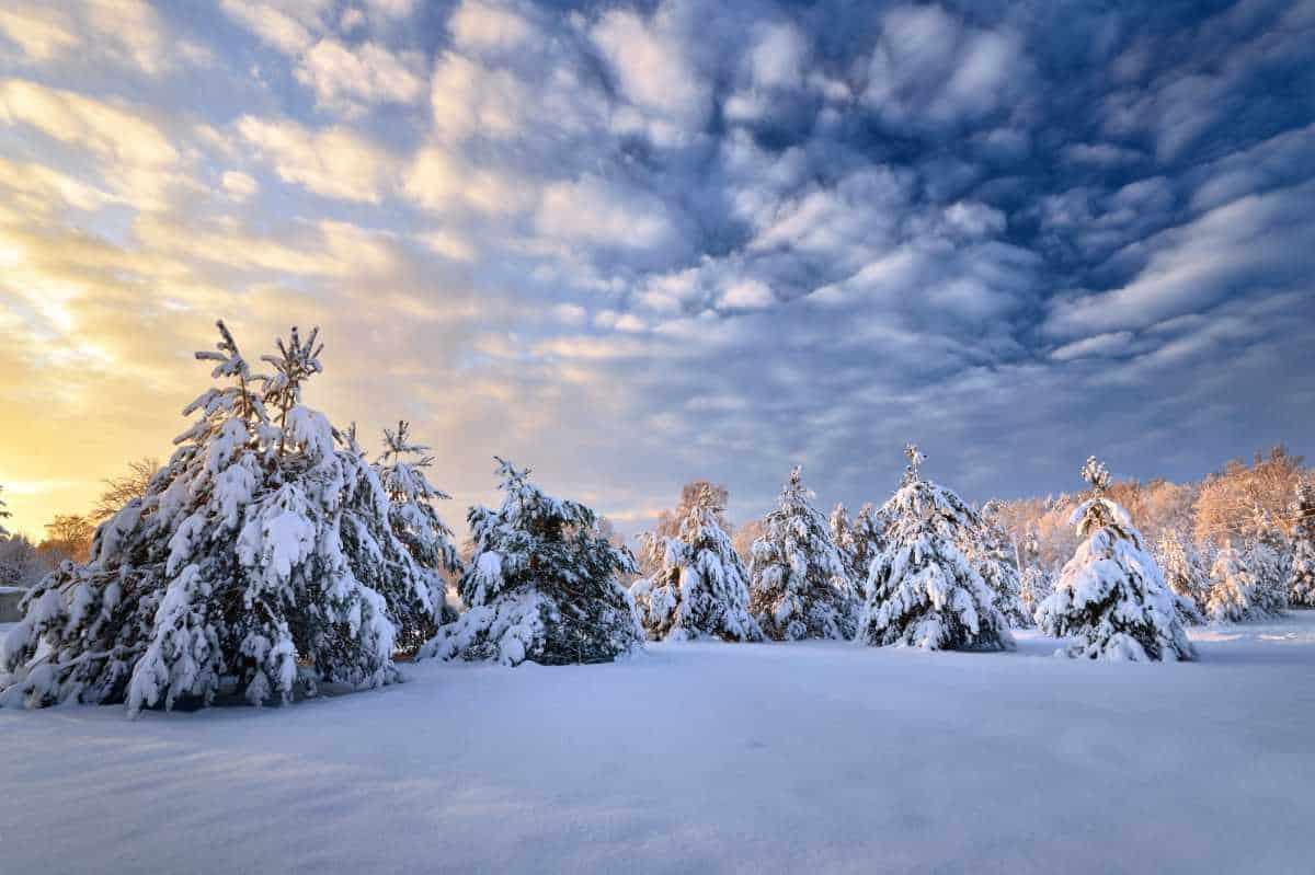 Vintervagga